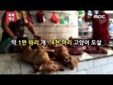'개고기 축제' 전통 문화 vs 동물 학대?