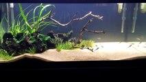 Black Beard Algae: 3 Easy Ways to Destroy BBA in your Aquarium/Plus Keeping BBA from Returning.