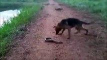 Ce chien s'en prend à une anguille électrique et va vite le regretter
