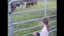 Cette fillette ne soupçonnait pas le pouvoir de son accordéon sur les vaches