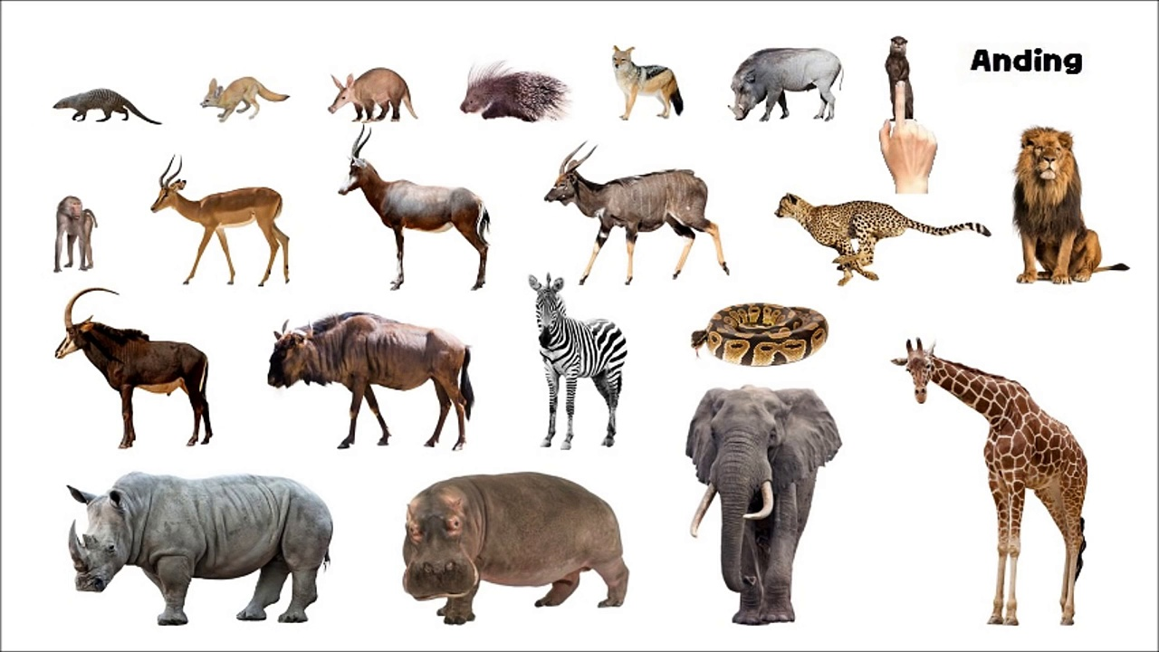 African Animals – Picture Play