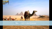 4 Days Cairo Tour Packages - Wonderful Cairo Vacation Packages
