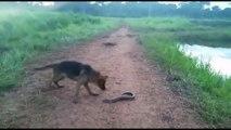 Un chien mord dans une anguille électrique et va clairement le regretter