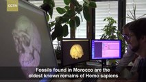 Oldest known fossils of human species unearthed in Morocco