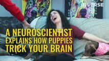 Your Brain on Puppies