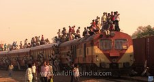 Local train travel in India - it takes all sorts to make India!