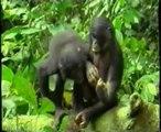 La empatia de los simios