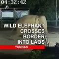 Asian wild elephant crosses China-Laos border | CCTV English