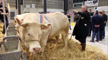 Mon film- concours de bovins de boucherie de race charolaise-1