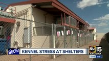 Shelters working to treat dogs with kennel stress