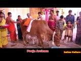 Gau Mata Ki Pooja - Indian Go Pooja - Mother Cow Worship - Culture Of India