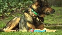 Hero dog saves policeman from stabbing