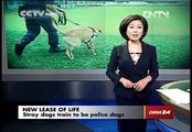 Stray dogs train to be police dogs
