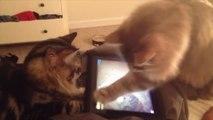 Ce chat est un pro des jeux vidéos!