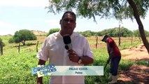 Correio Cidades - No sertão do estado, a chuva das últimas semanas elevaram o nível dos reservatórios na região de Patos.