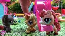 Minişler: Gıcık Kız || Minişler LPS MAYA - Littlest Pet Shop