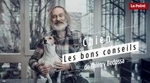 Chiens : les bons conseils de Thierry Bedossa
