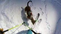 Ce skieur part en hors piste avec son chien... et il adore la poudreuse