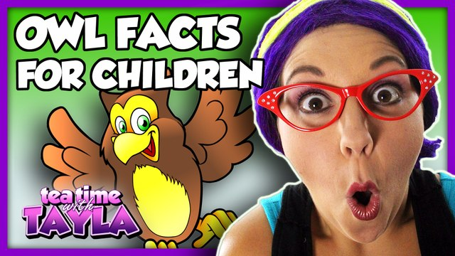 Kids Learning Animals | Owl Facts for Children | Learn to Identify Colors on Tea Time with Tayla