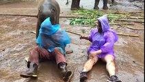 Un bébé éléphant trop mignon fait des gros câlins à une touriste
