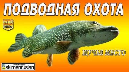 Подводная охота / Щучье место