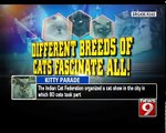 8th International Cat Show Of India in Bengaluru - NEWS9
