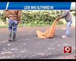 12 foot long King Cobra | Caught in Madikeri - NEWS9