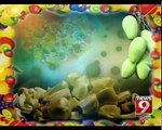 Mango Mania:  King of Fruits Displayed in Bengaluru - NEWS9