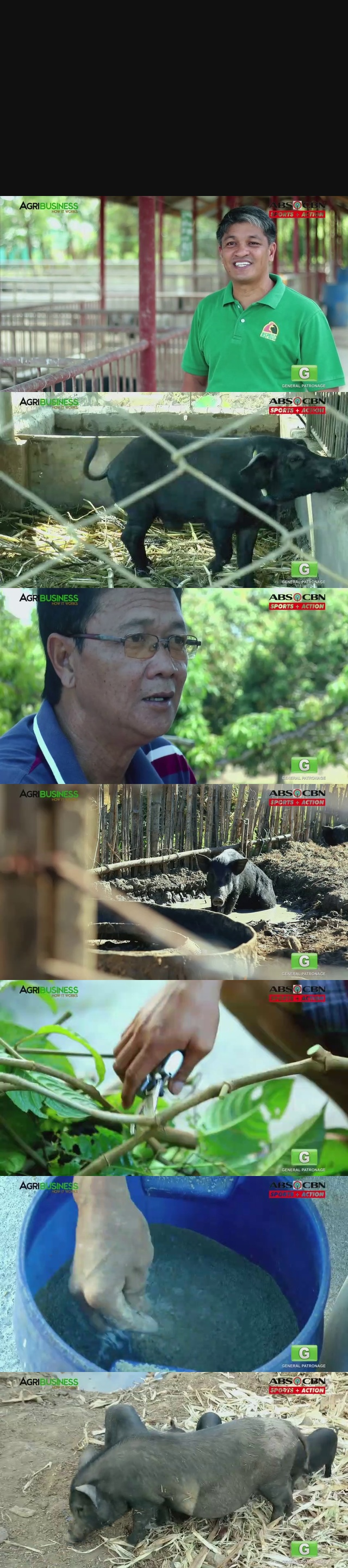 Native Pig Farming Part 2 : Native Pig Farming Prices | Agribusiness Philippines