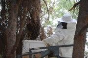 Parkta Arıların Saldırısına Uğrayan Vatandaşları, Haber Yapmaya Giden Muhabir Kurtardı