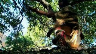 Deadliest Warrior S02e04 Aztec Jaguar Vs Zande Warrior
