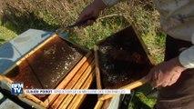 Les abeilles meurent de froid