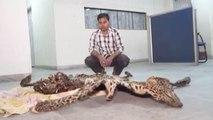 Leopard Skin Smuggling: Custom Officials nab smuggler RED HANDED carrying leopard skin Oneindia News
