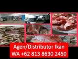 PROMO!! WA +62 813 8630 2450 Supplier Ikan Salmon Segar di Bekasi