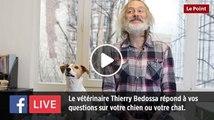 Facebook Live : le vétérinaire Thierry Bedossa répond à toutes vos questions concernant votre chien ou votre chat !