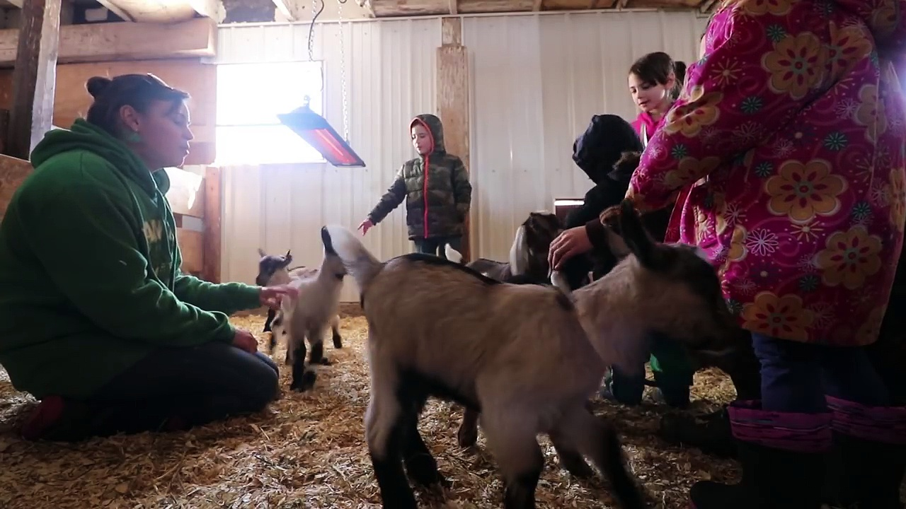 Buying a Milking Goat – How to find quality goats.