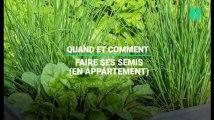 Comment faire ses semis de plantes aromatiques en appartement