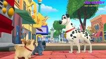 Puppy Dog Pals Animation Movies – Puppy Dog Pals Full Episodes Disney Junior – Cartoon For Kids #9 - YouTube