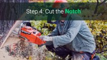 How To Cut Down a Tree With a Chainsaw The Right Way