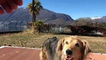 Giornata lido Ascona