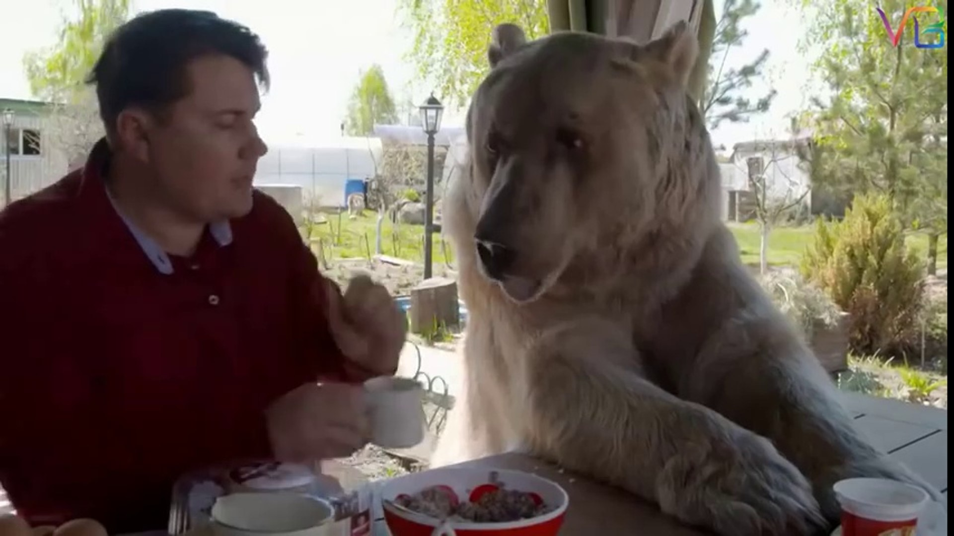 Friendly Dangerous Animals as Pets - Unusual Animals - Discovery Channel