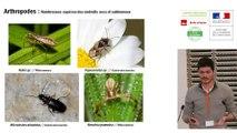 """Rencontre """"Toitures végétalisées et biodiversité"""" - Audrey MURATET, Maxime ZUCCA, Hemminki JOHAN, Marc BARRA (ARB îdF)"""