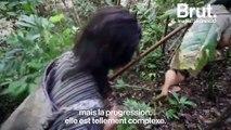Le youtubeur Le Grand JD veut alerter sur la destruction de l'écosystème de l'île de Bornéo