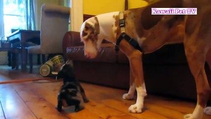 「かわいい犬」初めて自分の子供に会った父犬の反応・超嬉しそう