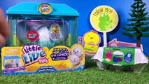 Little Live Pets Hatching Chick Eggs and Smiggle Golden Easter Egg