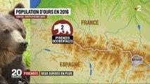 Pyrénées : deux ourses vont être réintroduites
