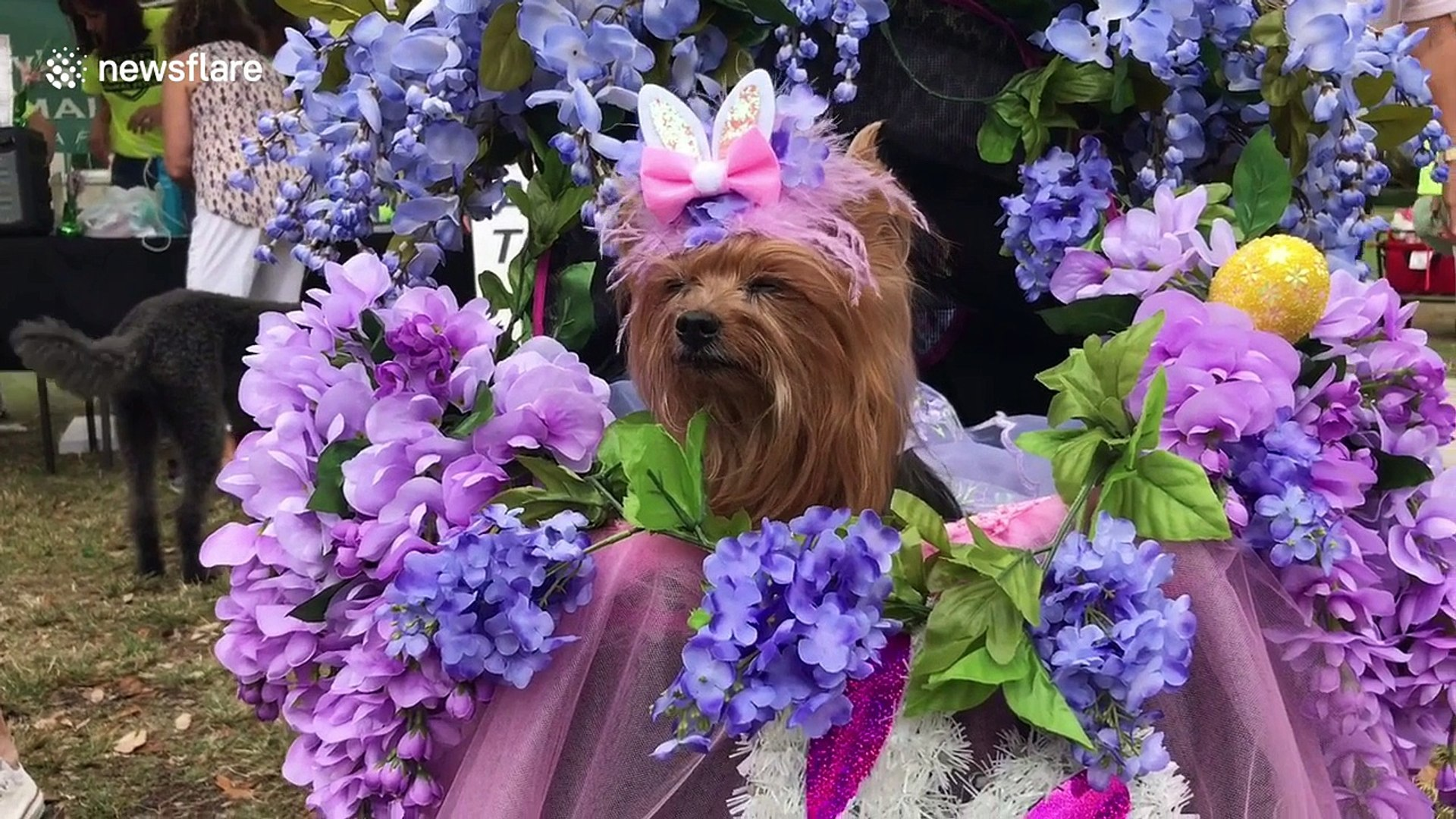 Dozens of pets take part in Easter Bonnet Pet Parade in Florida