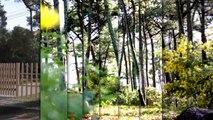 A vendre - Maison/villa - Lege cap ferret (33950) - 7 pièces - 200m²