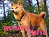 Découvrez Natsu, le chien de Squeezie !