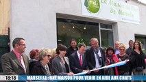 L'ouverture de la maison des chats à Marseille va permettre de stériliser gratuitement entre 700 et 900 félins par an.